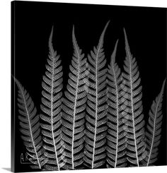 Fern Leaf X-Ray Photograph X-Ray art by Nick Veasey RADIOGRAPHX-RAY PHOTOGRAPHY / X-RAY ART More At FOSTERGINGER @ Pinterest