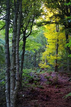 Brightness in the woods