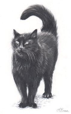 Black Cat,Cat Art Print, Pencil Drawing of a Cat. Gift for Cat Lover.