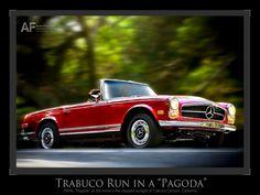 Afternoon Run in a Pagoga, Trabuco Canyon