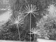 Black and white image of our allium sculptures in the rain.  www.ironvein.co.uk Metal garden sculpture Steel garden sculpture