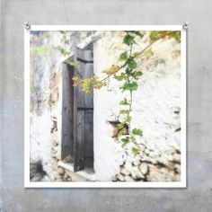 Pretty village house with faded wooden shutters and artfully hanging vine.  Shot in Drapanias in Crete.  Fine art photo print £21.50