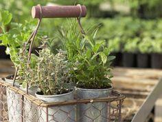 Old Baskets Antique | Zutaten die in keiner Küche fehlen dürfen | Für Sie