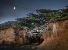 National Photography, Landscape Photographers, Tree Of Life, Natural Beauty, All About Time, Washington, Coast, Environment, Earth
