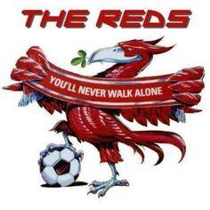 Liverpool Fc Gifts, Liverpool Fc Shirt, Liverpool Tattoo, Ynwa Liverpool, Liverpool Fans, Liverpool Football Club, Liverpool Fc Wallpaper, Liverpool Wallpapers, Steven Gerrard