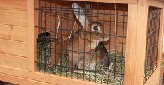 Enough Is Enough, Rabbits, Happy Life, Bunny, Space, Big, Board, The Happy Life, Rabbit
