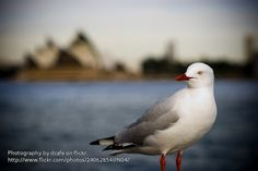 Seagull's World Tour (Sydney)