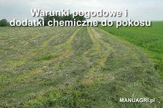Warunki pogodowe i dodatki chemiczne do pokosu - http://wp.me/p6aAA2-dH
