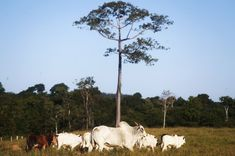 Colombia, il parco nazionale Chiribiquete diventerà uno dei più grandi al mondo #ambiente