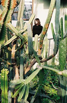 Cactus jungle. I want one! Photo:momomi_aloha_garden
