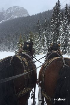Sleigh Ride in Canada – Art Of Equitation Beautiful Nature Scenes, Beautiful Horses, Animals Beautiful, Beautiful Places, Christmas Scenery, Winter Scenery, Horses In Snow, Snow Gif, Painting Art