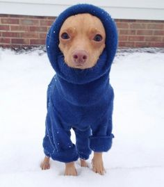 """Tuna the Dog. """"This phthweater iphthn't really blue, it'phth juphtht really cold out here!"""""""