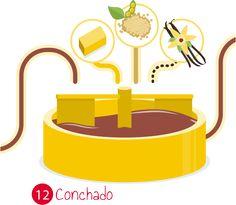Conchado