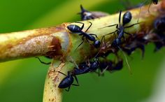 Arlington Exterminating, if you want to get rid of Spiders, Fleas, Ants & Wasps in North Arlington, then call us today and get a free estimate. Ants In Garden, Garden Insects, Garden Pests, Get Rid Of Spiders, Get Rid Of Ants, Wasp Removal, Queen Ant, Ant Problem, Ant Colony
