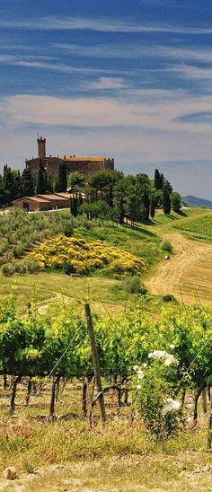 Castello Banfi winery, Montalcino, Siena, Toscana, Italy