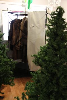 Narnia party - three Christmas trees w/ a wardrobe standing in between for photos