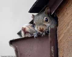Baby Squirrels! They're so cute. :D