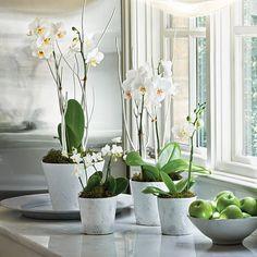 Orquídeas blancas en macetas