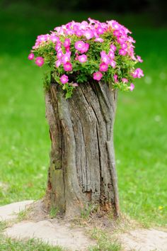 Tree stumps need not be uprooted and thrown away. Trees which have been cut down with the stump left behind can be easily recycled and reused. Well tree stump in garden works in. Tree Stump Decor, Tree Stump Planter, Garden Trees, Garden Planters, Garden Art, Garden Ideas With Tree Stumps, Garden Oasis, Container Garden, Balcony Garden