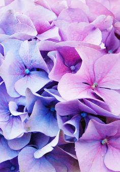 Hydrangea, I can't wait to have a garden of my own to plant these