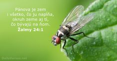 Get a Random Illustrated Bible Verse! Simply click the button to see another inspiring Bible verse! Your word is a lamp for my feet, a light on my path. Bible Verses About Life, Verses About Peace, Peace Bible Verse, Bible Scriptures, Psalm 24, What Attracts Flies, Ecclesiastes 12, Bible Verse Pictures, Biblia Online