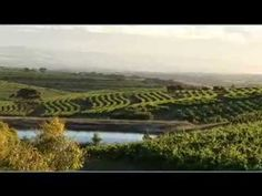McLaren Vale - just beautiful!