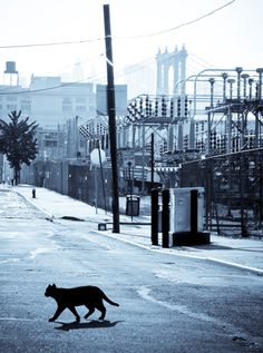 Le Chat Noir Dumbo Brooklyn Digital by piratesofbrooklyn on Etsy, $10.00