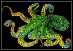 Octopus 2 by Trevor Grant Curious Creatures, Sea Creatures, Octopus Box, Octopus Pictures, Sea Life Art, Octopuses, Aquarium Design, Animal Magic, Crayon Art