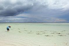 Thomas Peschak photographs blacktip reef sharks on Aldabra atoll.