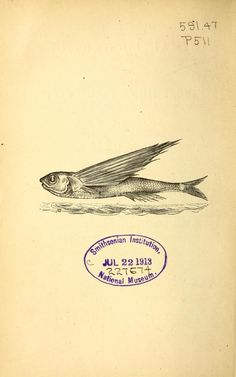 Flying Fish James Bell Pettigrew 1874