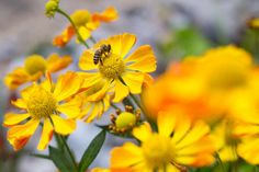Discover how to keep your garden looking colourful from August to October, with late-summer flowering plants recommended by BBC Gardeners& World Magazine. Summer Flowers To Plant, Late Summer Flowers, Planting Flowers, Flowering Plants, Prairie Planting, Prairie Garden, Summer Bulbs, Indian Paintbrush, Sun Loving Plants