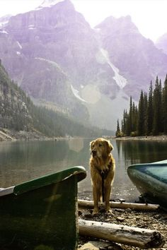 The perfection in this image is overwhelming - mountains, lake, trees, and a golden retriever. Take me here now, please.