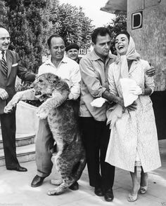 Elizabeth Taylor and Mike Todd pose with a young lion, 1957. Because actresses. And lions. Obviously.