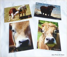 Set of 4 cards postcards lined with pictures of cows Cow, Moose Art, Etsy, Nature, Photos, Animals, Cows, Love, Artist