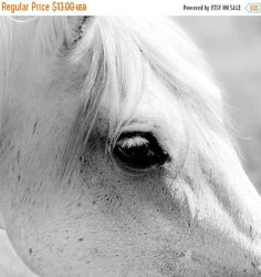 Horse in black and white - horse photography print nature photo white horse photo high key nature dark eyes photography 5x5 inches pony