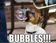 Bubbles bubbles bubbled