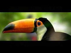 La selva amazónica del Perú es una de las zonas con mayor diversidad biológica del planeta. Es tan grande la variedad de especies que se estima que la mayor ...