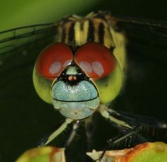 example of a macro photograph of a dragonfly difference between macro, micro, and closeup photography