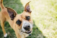 At Pets Come First in Centre Hall, PA. #shelter #petscomefirst #adopt #dog #brown #smile #smiling #baxter