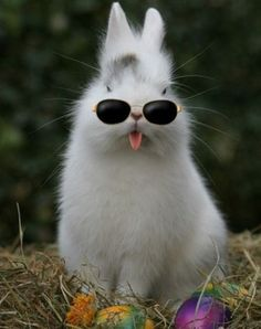 This is what I call a funny bunny!  (: