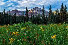 Wildflower Meadow and Hesperus Peak   by Guy Schmickle