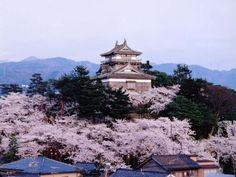 #japan #cherryblossoms #chubu #fukui 霞ヶ城公園