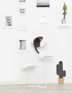 Classy furniture for discerning cats. Mobilier chic pour chat exigeant.