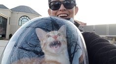 Cats Are Assholes, Animals, Animales, Animaux, Animal, Animais