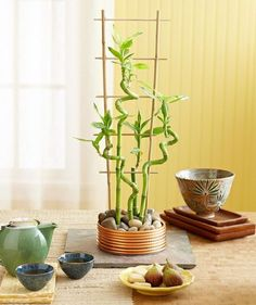 The easy-care lucky bamboo design ideas and decorations - GoWritter Bamboo Design, Plant Design, Lucky Bamboo Plants, Bamboo Trellis, Small Space Interior Design, Decoration Plante, Bamboo Crafts, Room With Plants, Plant Cuttings