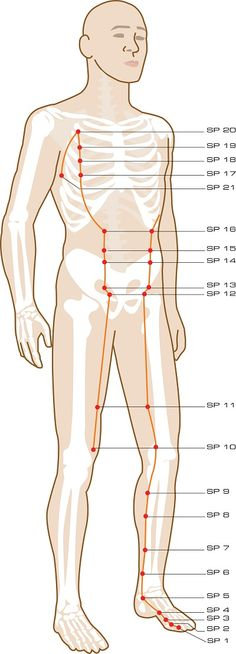 Spleen Acupuncture Points