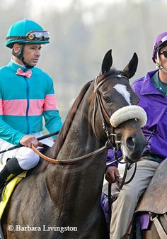 2010 Horse of the Year ZENYATTA - a photographic tribute | Daily Racing Form