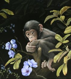 8.5 x 11 Prints Collectable Art Work Angolan Colobus Monkey