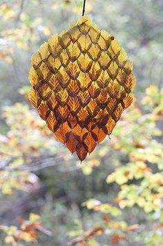 Autumn Beech Leaf Tear  by Richard Shilling