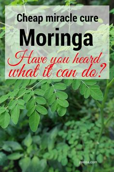 The low cost, miracle working tree moringa I do believe that nature has the cure for all the ills around. One such remedy that I have heard a lot about is the moringa plant. One woman's miracle. Herbal Remedies, Health Remedies, Natural Remedies, Health And Beauty, Health And Wellness, Health Tips, Holistic Wellness, Natural Medicine, Herbal Medicine
